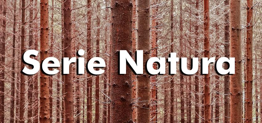Serie Natura, de RigidPan® - Cantos a color madera natural texturizados para paneles ligeros - TOT MARC